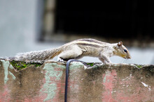 Close-up Of Squirrel On Wall