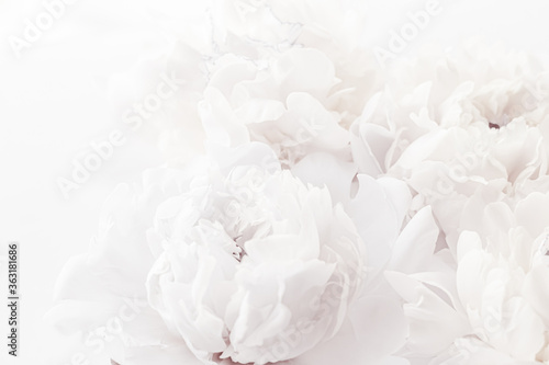 Leinwand Poster Pure white peony flowers as floral art background, wedding decor and luxury bran