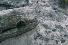 An Old Log On The Beach, Washe...
