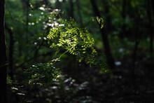 Light On Plant