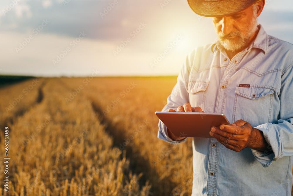 Fototapeta farmer using tablet computer outdoor in wheat field