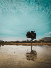 Lonely Tree On The Shore