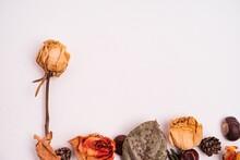 Closeup Shot Of Dried Flowers ...