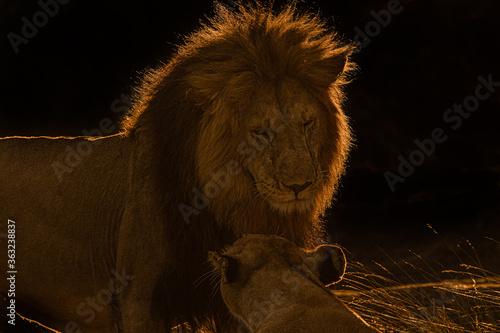 The Lion King!! Wallpaper Mural