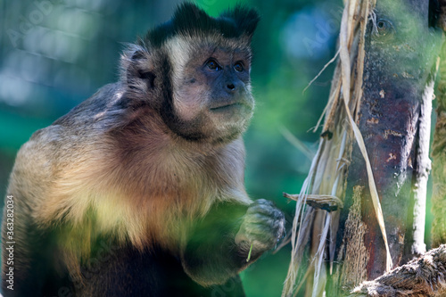 Portrait of an adult cute monkey sadly sitting on a tree branch, blurred background