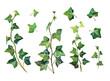 Watercolor botanical set of plant fern.