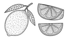 Lemons. Set Of Black And White...