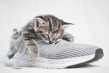 Portrait Of A Cute Tabby Kitten Sleeping In Shoes