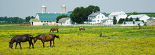 Amish Farm With Barn And Horse...