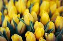 Full Frame Shot Of Yellow Tulips