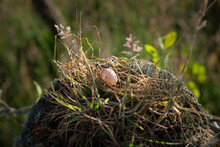 A Robin's Egg On A Country Fen...