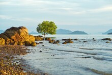 Isolated Mangrove Tree Grows On The Coast With Rock And Landscape Of Sea In Background In Morning