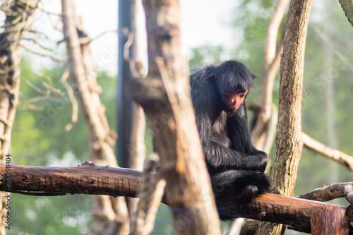 Monkey Sitting On A Tree Canvas Print