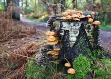 Close-up Of Mushrooms Growing ...