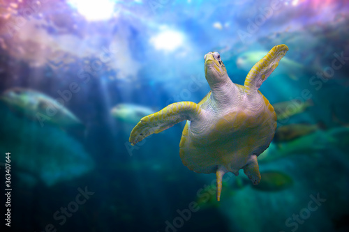 Fotografia Low Angle View Of Turtle Swimming Under Water
