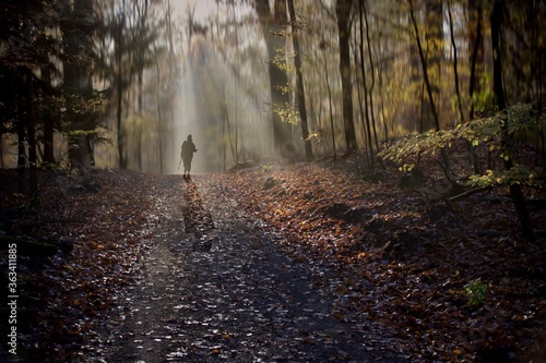 Canvas Print Senior Woman Walking On Footpath In Forest