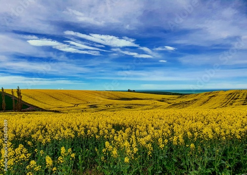 Canvas Scenic View Of Oilseed Rape Field Against Sky
