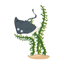 Sea Underwater Life, Stingray Animal With Seaweed On White Background Vector Illustration Design