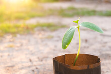 Small Young Plant (seedling) O...