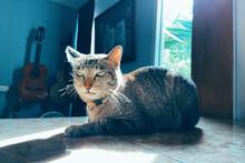 Portrait Of Cat Sitting On Flo...