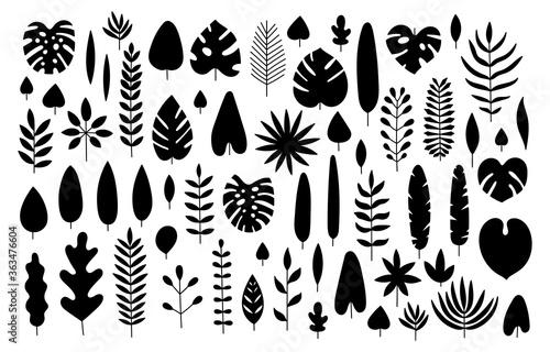 Fototapeta Vector set of silhouette tropical leaves. obraz