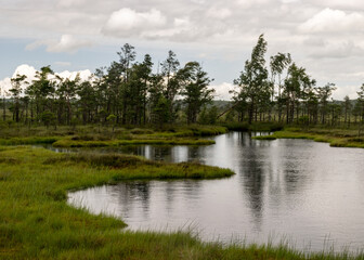 Fototapeta na wymiar stunning bog views. beautiful clouds. View of the beautiful nature in the swamp - pond, pines, moss. Sunny day. a typical West-Estonian bog. Nigula Nature Reserve