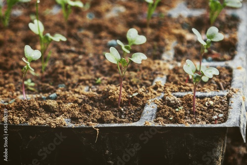 Fotografiet Close-up Of Broccoli Plant