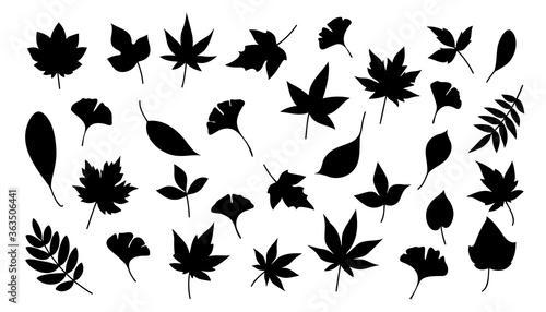 Foto 秋の葉っぱ_シルエット