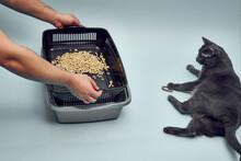 New Gray, Empty Cat Tray. Tray...