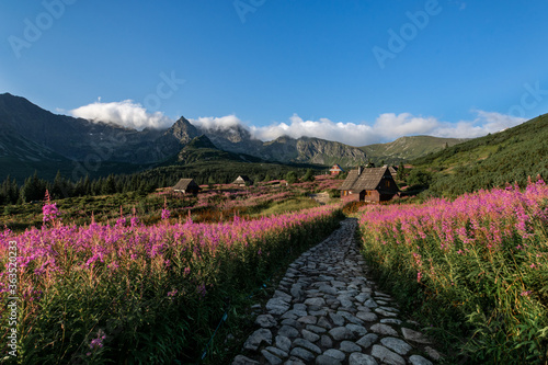 Fototapety, obrazy: Scenic View Of Flower Field Against Sky
