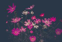 Purple Flowers On A Dark Backg...
