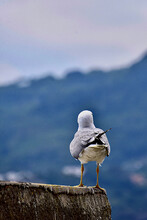 Close-up Of Seagull Perching O...