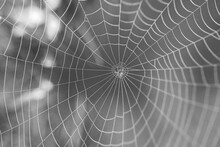 Insect Spider And Web
