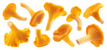 Fresh Chanterelle Mushrooms Is...