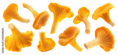 Carta da parati Fresh chanterelle mushrooms isolated on white background