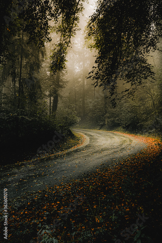 Road Amidst Trees In Forest During Autumn - 363601070