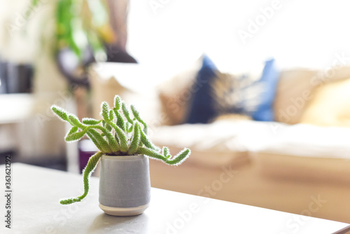 Light and airy interior of living room with house plant Canvas-taulu