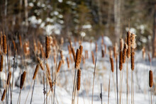 Close-up Of Frozen Plants On Field During Winter
