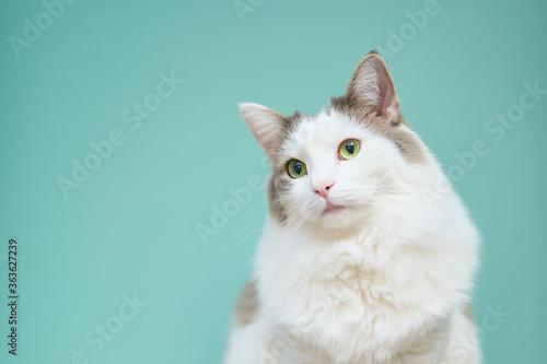 Fotografia Portrait Of White Cat Against Blue Background