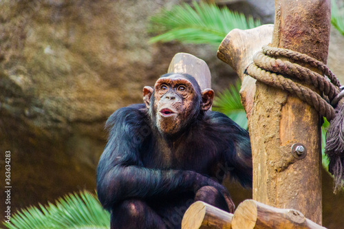 Monkey Sitting In A Zoo Canvas Print