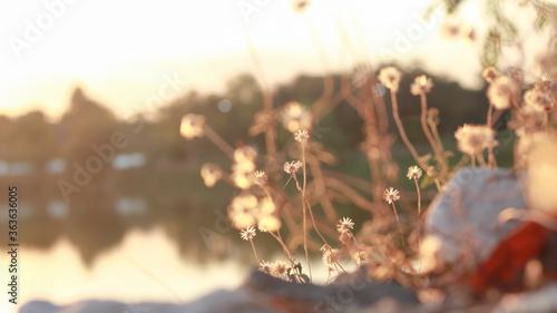 Fototapeta Close-up Of Flowering Plant Against Sky During Sunset
