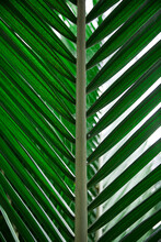 Green Large Palm Leaf In Nature
