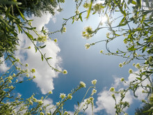 Grass, Flowers And Sky