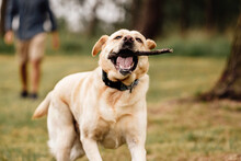 Funny Dog ??running With Stick...