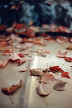 Fall Leaves On A Vintage Car