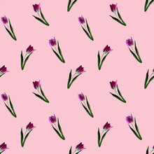 Gouache Floral Tulip On Pink B...