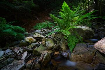 Jungle stream with wild ferns