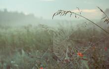 Dew Covered Spiderweb In Meado...