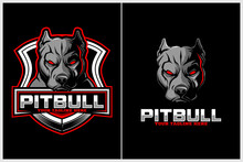 Aggressive And Angry Pitbull D...
