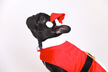 Dog With Santa Outfit On